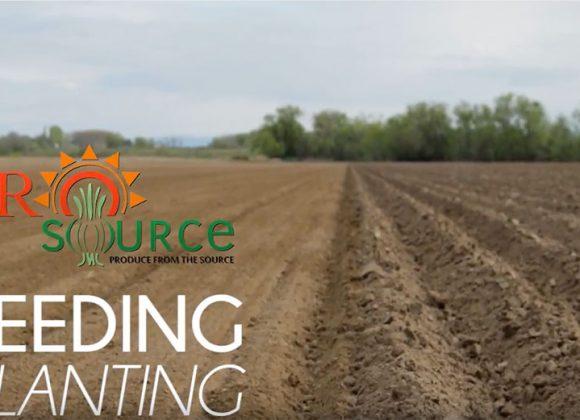 Seeding: Planting