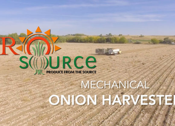Mechanical Onion Harvester